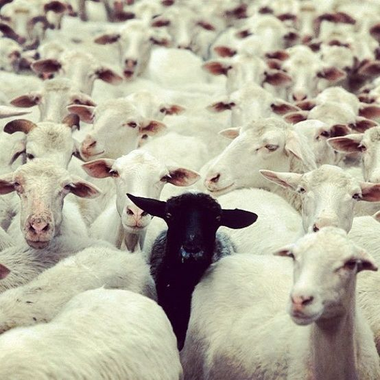 Will the Real Herd Immunity Please Stand Up?